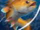 download anzol de pesca dinheiro infinito