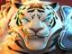 download Might & Magic Elemental Guardians Apk Mod unlimited gems